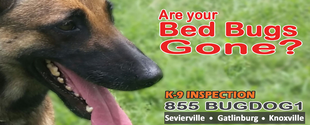 Heat Treatment For Bed Bugs Knoxville Tn