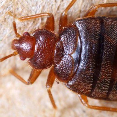 main_rentokil-com-bed-bugs-hero-165212462-770x360
